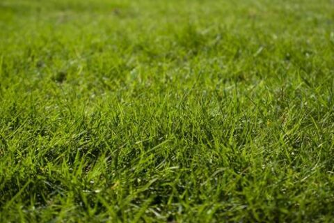 Weeds You Might Not Want In Your Garden