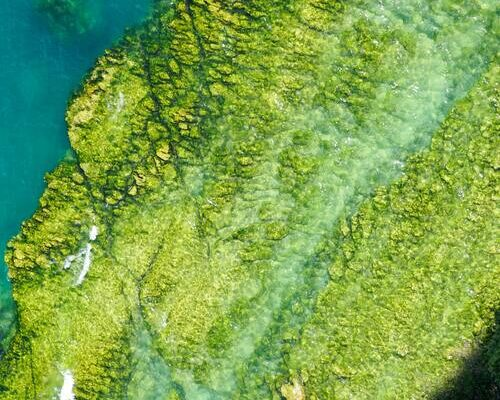 Algae Plaguing The Exterior Of Your Home – How To Deal With It?